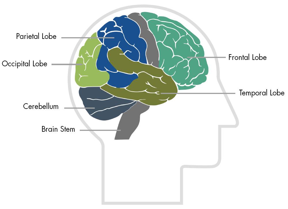 Traumatic Brain Injury Resource Guide Hemisphere Brain Functions