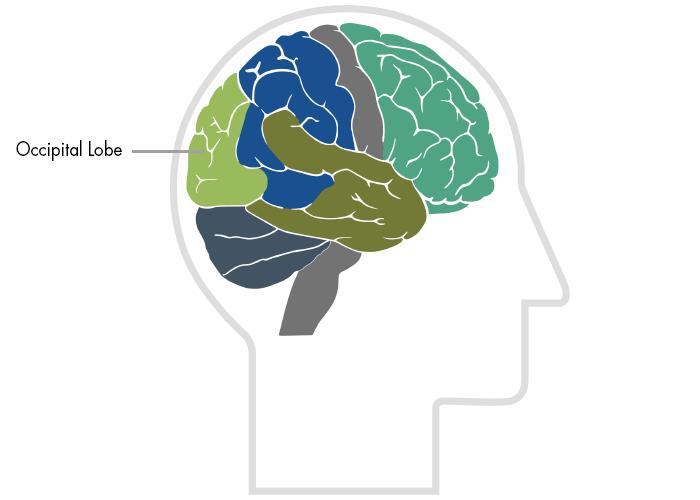 Traumatic Brain Injury Resource Guide - Occipital Lobes